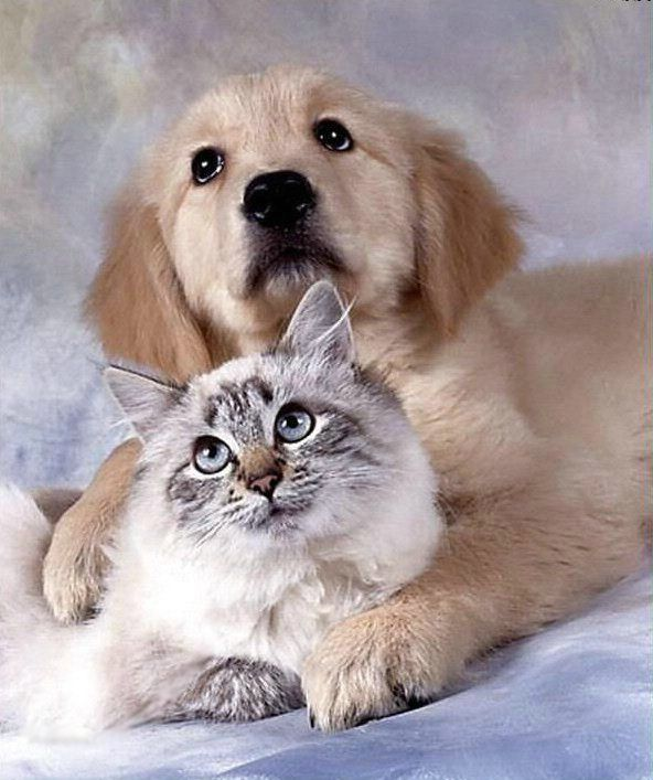 Funny Cats And Dogs Images