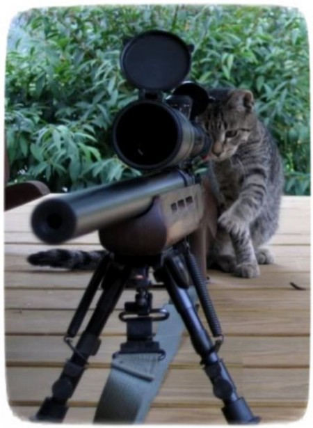 Funny Cats Pictures With Guns