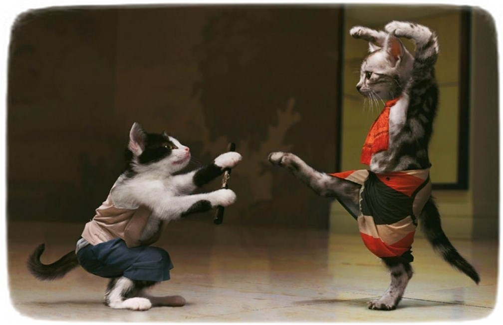 Funny Cats Pictures Without Words