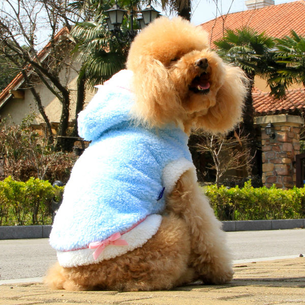 Funny Clothes For Dogs