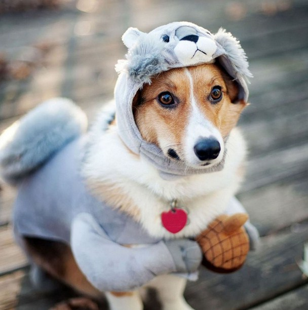 Funny Dog Costumes Photos