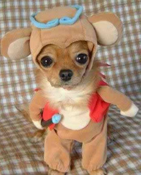 Funny Dog Photos For Kids