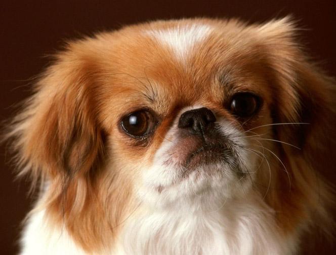 Funny Mixed Dog Breeds
