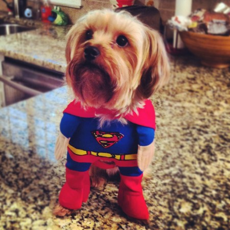 Funny Pictures Of Dogs In Clothes