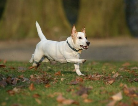 Funny Pictures Of Dogs Running
