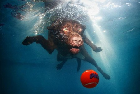 Funny Pictures Of Dogs Underwater
