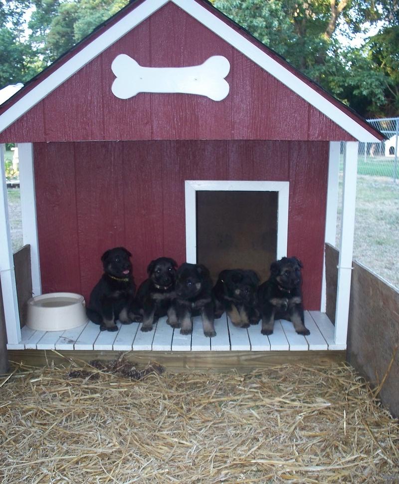 German Shepherd Dog House