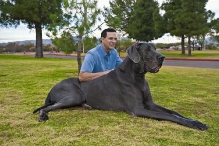 Giant Dog Breeds Images