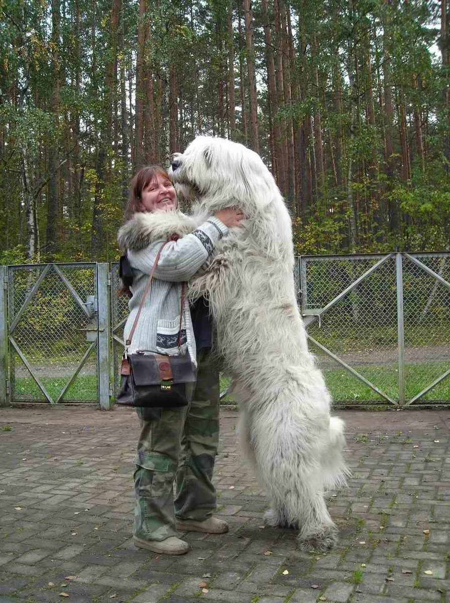Giant Dog Breeds Russian