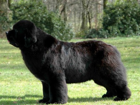 Giant Russian Dog Breeds