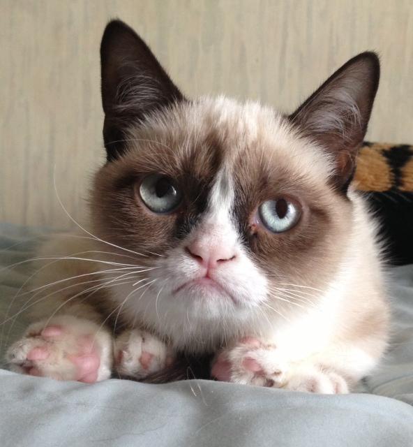 Grumpy Cat Breed Kittens