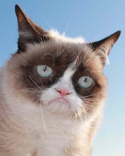 Grumpy Cat Breeders
