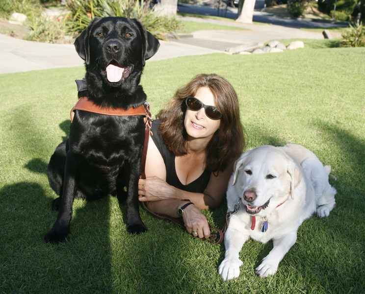 Guide Dogs For The Blind Training