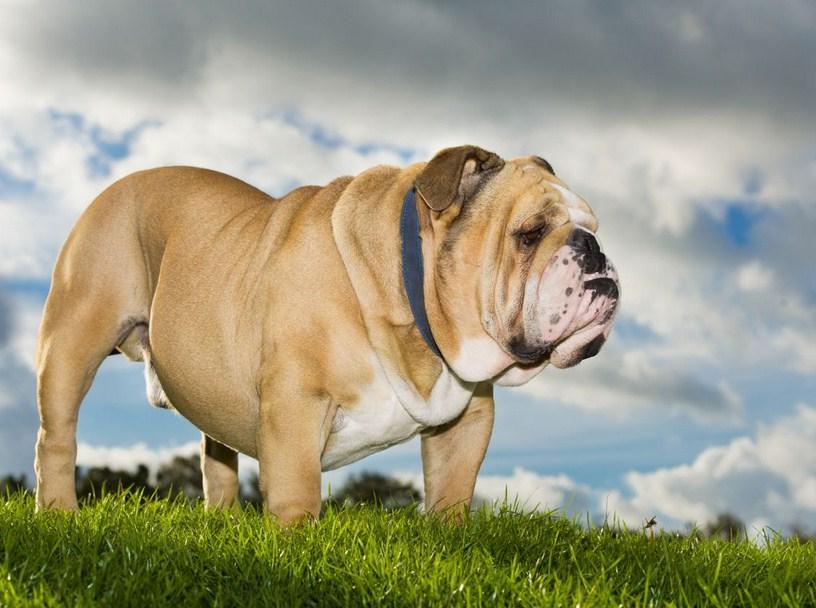 Healthiest Dog Breeds Uk
