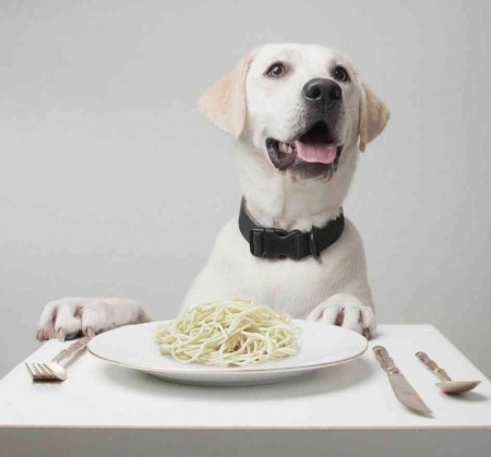 Healthy Dog Food Brands For Small Dogs