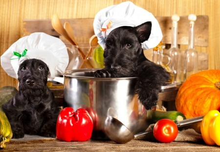 Healthy Dog Food For Small Dogs