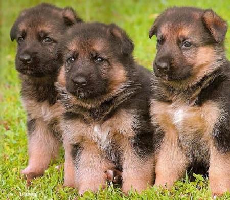 Hound Dog Breeds Pictures