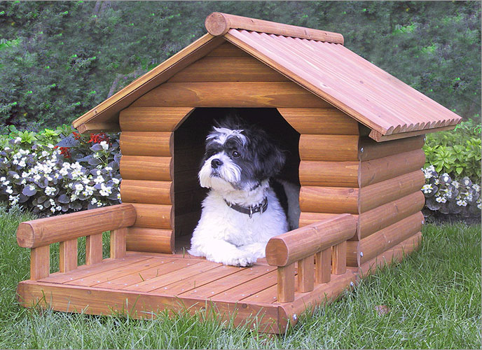 House Training A Dog With A Crate