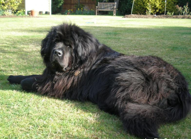 Huge Dog Breeds List Pictures