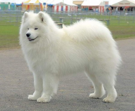 Huge Dog Breeds With Long Hair