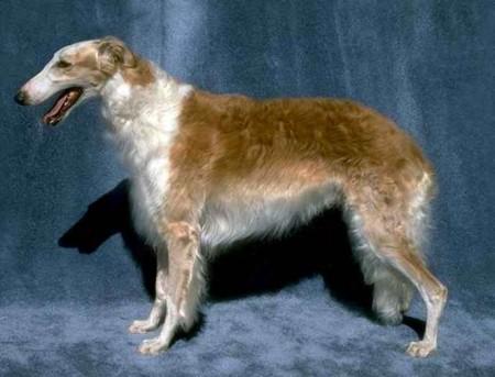 Hunting Dog Breeds Pics