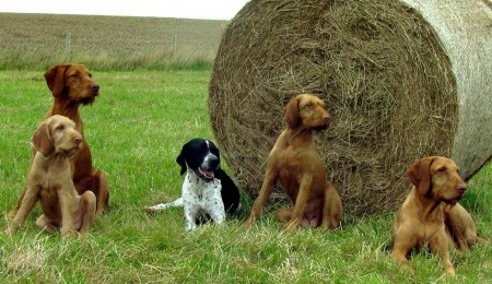 Hunting Dog Breeds Puppies