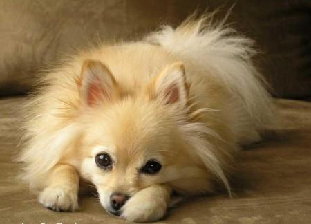 Hypoallergenic Dog Breeds For Kids