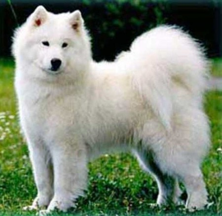 Hypoallergenic Dog Breeds Small
