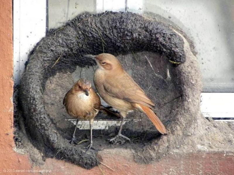 Images Of Birds And Their Nests