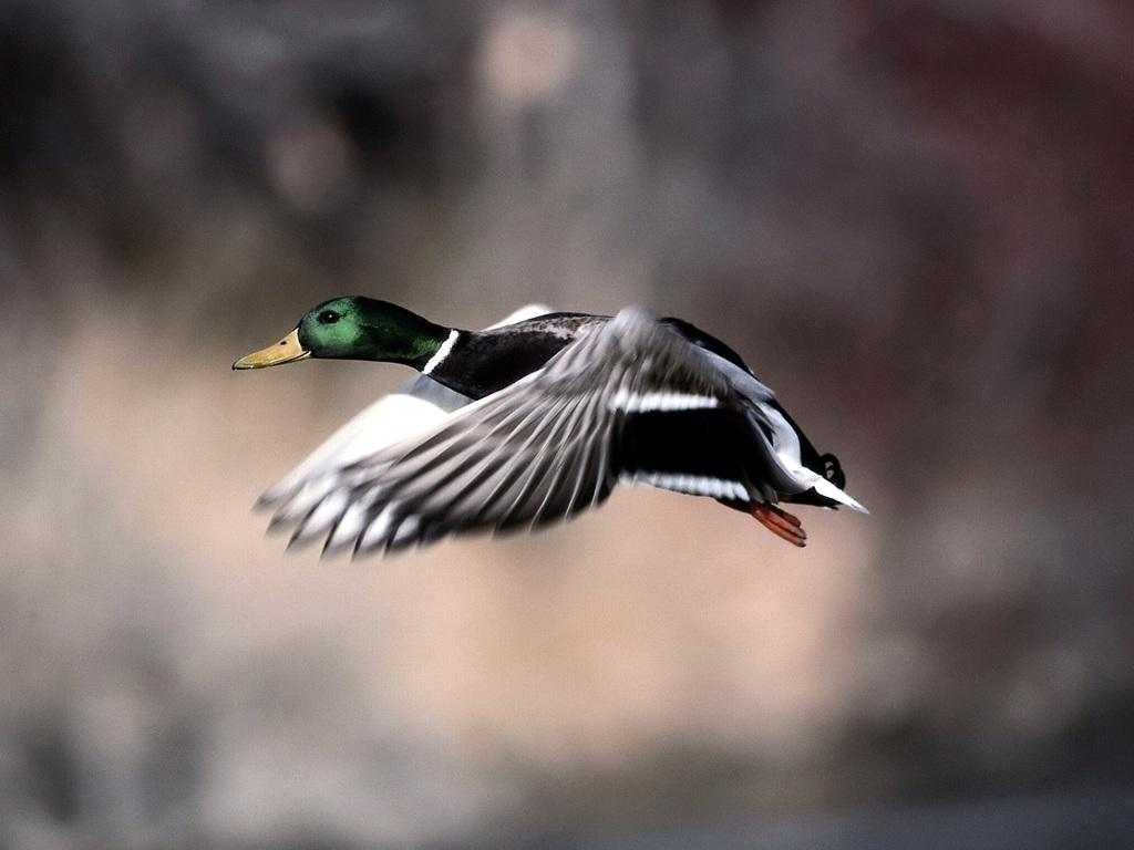 Images Of Birds Flying