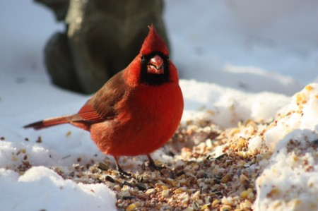 Images Of Birds In Winter
