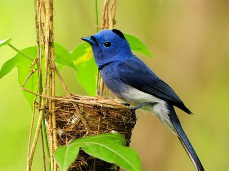 Images Of Birds Nest