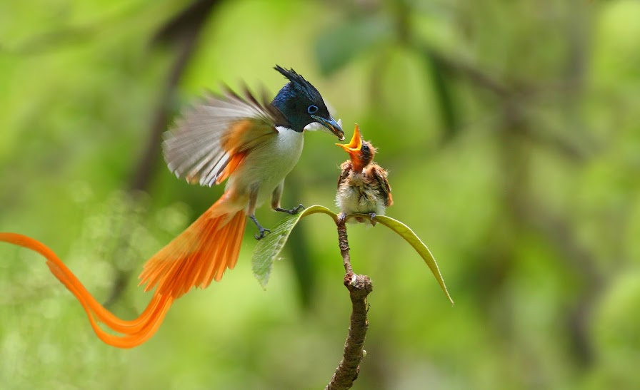 Images Of Birds Of Paradise