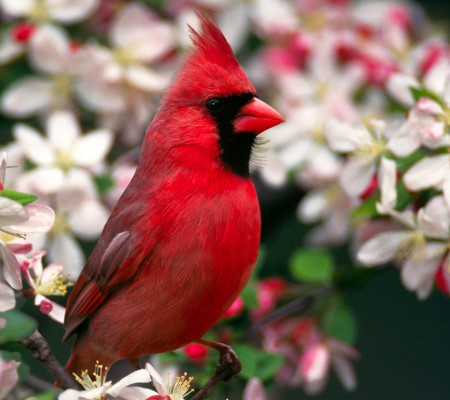 Images Of Birds On Branches