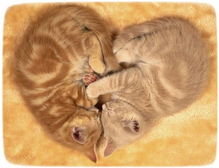Images Of Cats In Love