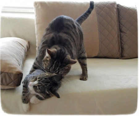 Images Of Cats Mating