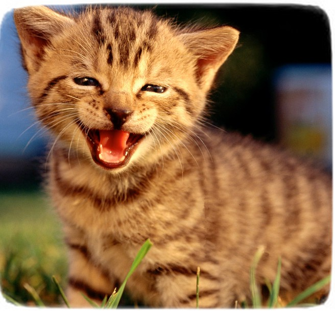 Images Of Cats Smiling