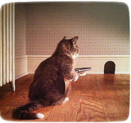 Images Of Cats With Guns