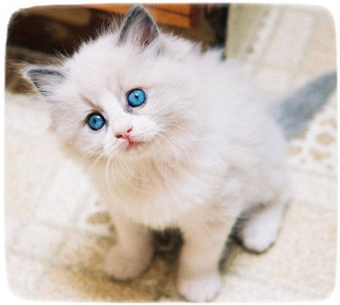 Images Of Different Breeds Of Cats