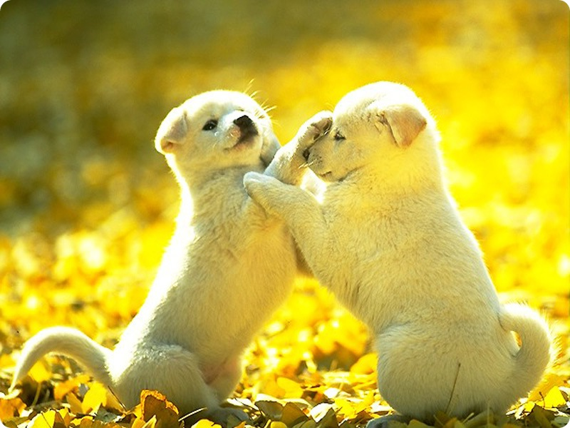 Images Of Dogs And Puppies