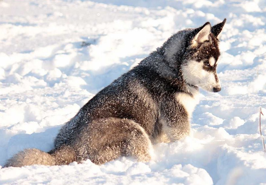Images Of Dogs In Snow