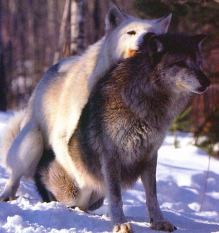 Images Of Dogs Mating