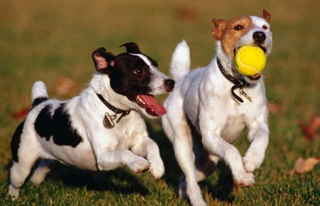 Images Of Dogs Playing