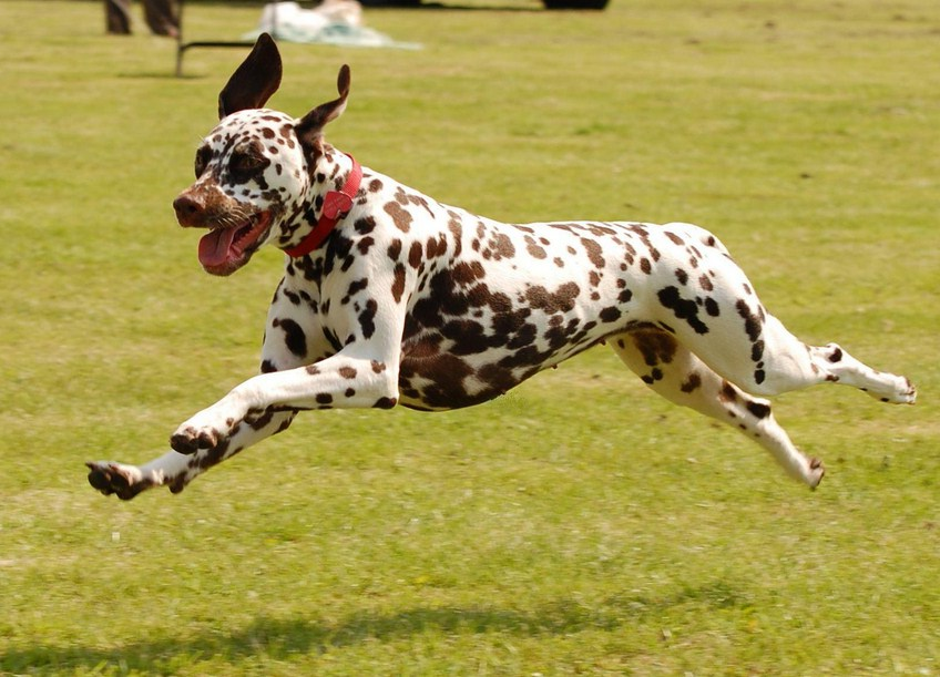 Images Of Dogs Running