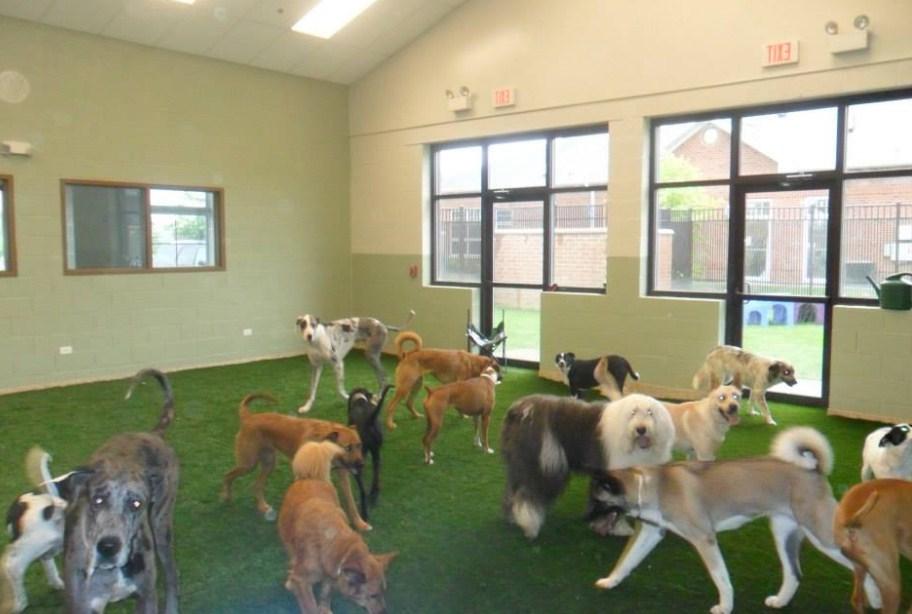 Indoor Dog Park Chicago