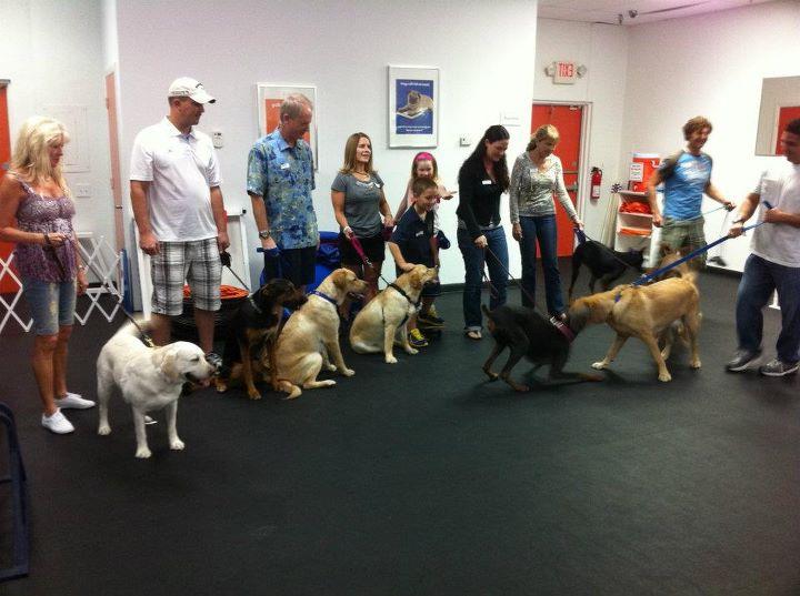 Indoor Dog Park Franchise