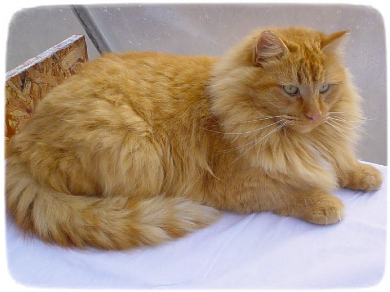 Kinds Of Cats With Pictures And Names
