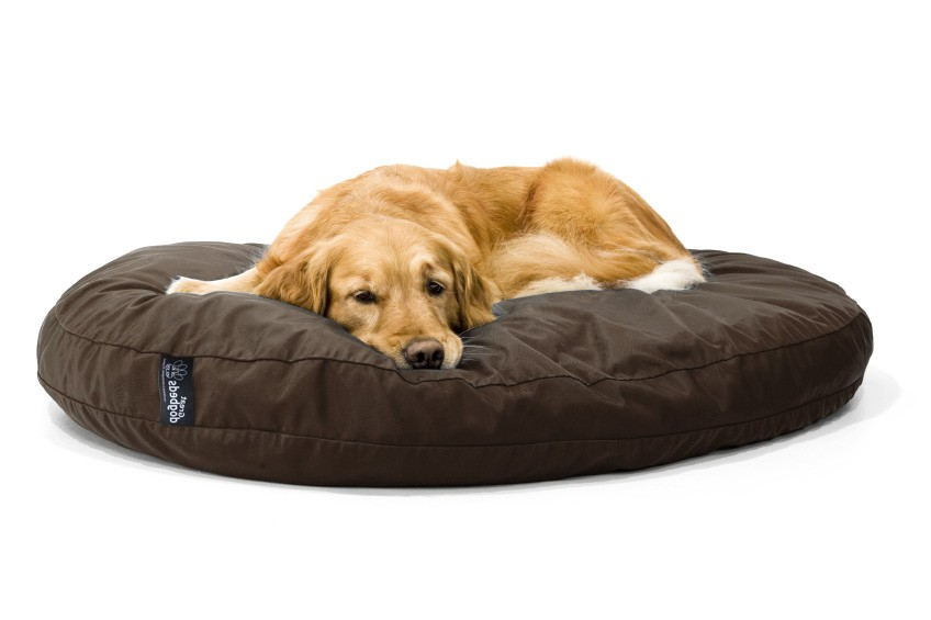 Kong Memory Foam Dog Bed