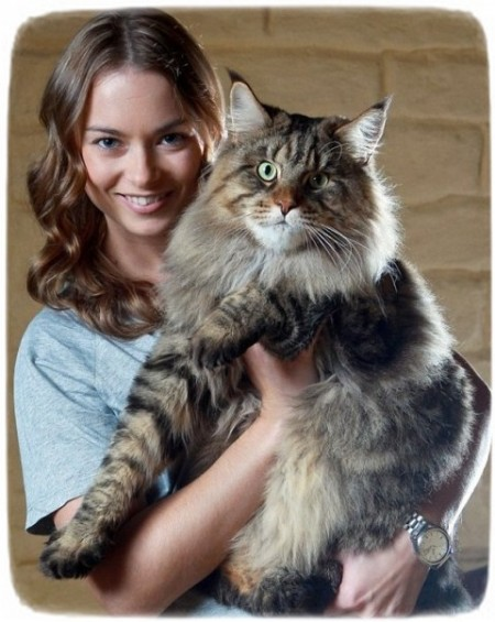 Large Cat Breeds Australia