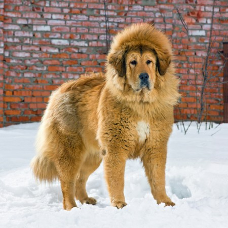 Large Dog Breeds List With Pictures